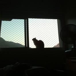 밖에 나가고 싶은 걸까?