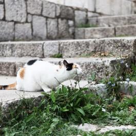 모서리에 고양이가 몸을 비비는 이유?