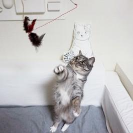 어느 고양이용품집 고양이의 하루