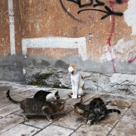 운수 좋은 날 - 크로아티아의 길고양이 ⑪