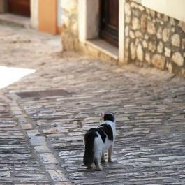 우두커니-크로아티아 길고양이 ①