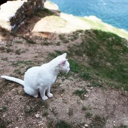 여행 – 크로아티아 길고양이 ⑤