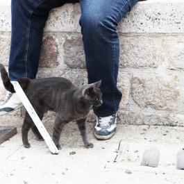사람과 고양이 – 크로아티아의 길고양이 ⑩