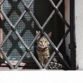 길고양이일까? 집고양이일까 - 크로아티아의 길고양이 ⑬