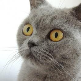 Q. 하루 중 고양이가 가장 좋은 시력을 자랑할 때는?