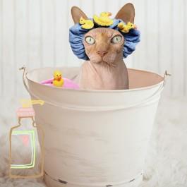 Q. 사람용 오가닉 샴푸를 고양이에게 써도 될까