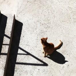 계단 - 크로아티아의 길고양이 ⑰