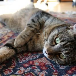 미끄러운 마루와 고양이 건강의 상관관계