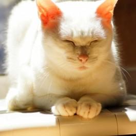 Q. 분당 호흡 수는? 고양이 바이탈사인