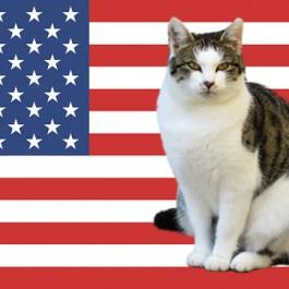 女 벨라, 男 레오…, 인기 많은 세계 고양이 이름 순위