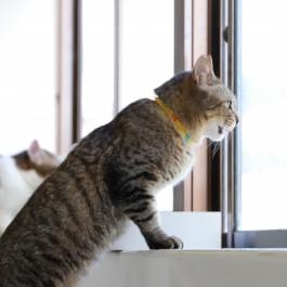 작은집이라면 캣타워보다 고양이 창문 선반이 좋다