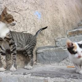 이것만 봐도 알  있음,  초간단 고양이 신뢰도 체크 포인트 4
