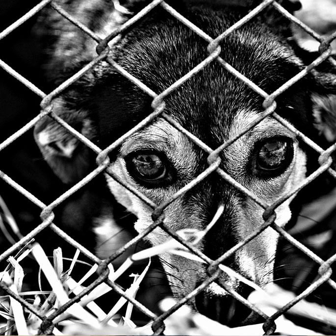 동물보호단체, 동물보호법 방기 규탄