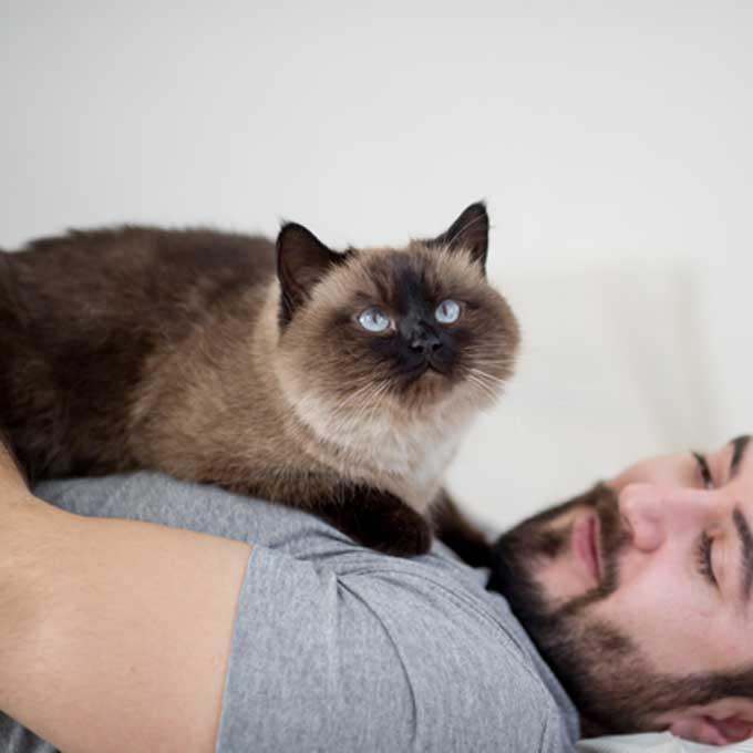 고양이가 '지나치게 귀엽게' 집사를 깨우는 방법 7