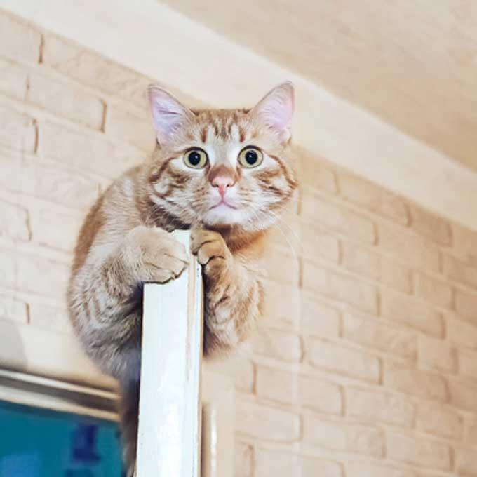 """""""이런 곳에도"""", 고양이가 잘 숨어 있는 8곳"""