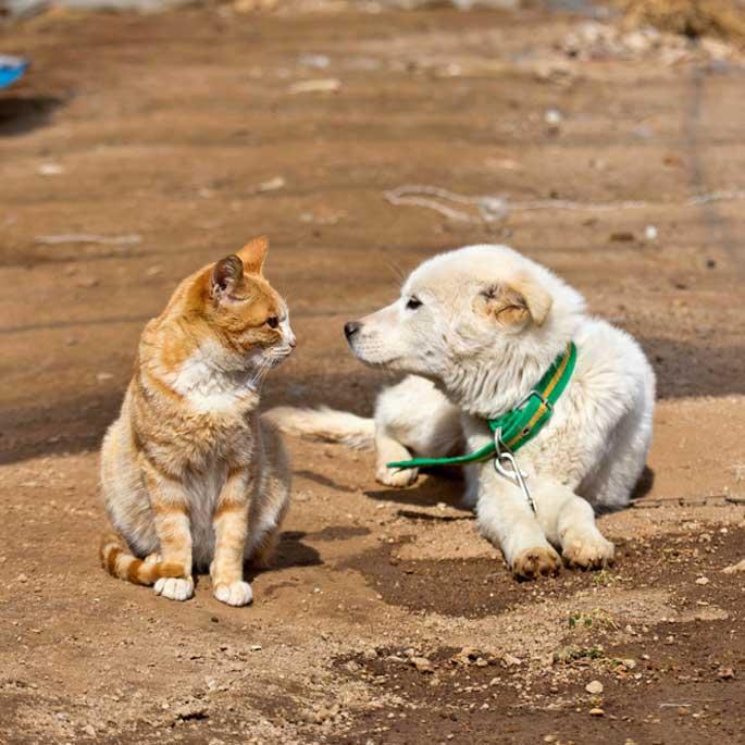 """""""너 나 좋아해?!"""" 장려상에 고양이사진 2점 선정"""