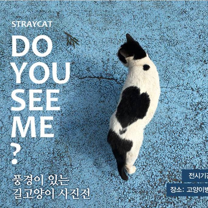 백산동물병원, 제1회 고양이 사진전 개최