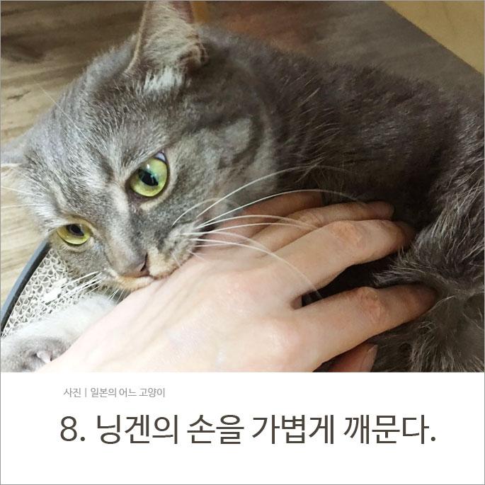 당신의 고양이로부터 당신이 사랑받고 있다는 증거 13가지