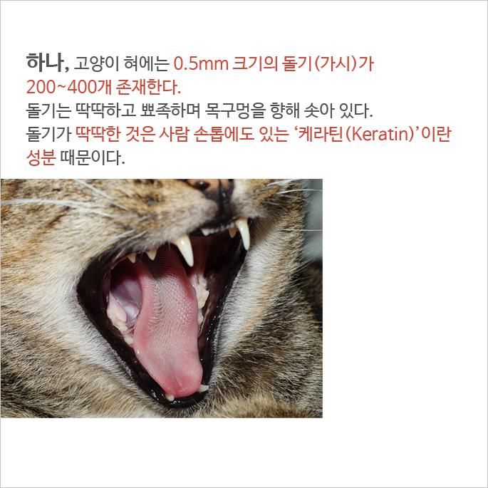 당신이 모르는 고양이 혀에 대한 비밀 5가지