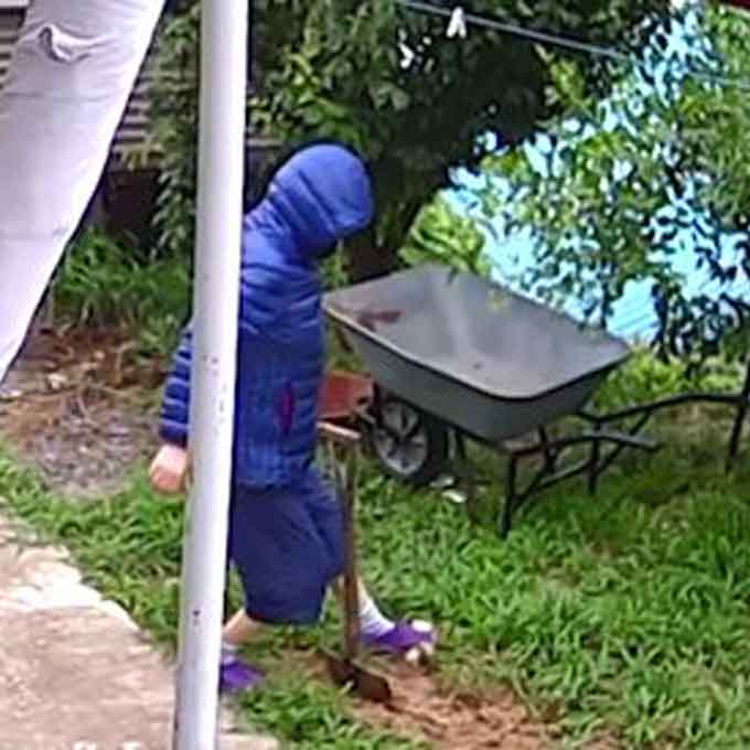 중년 여성, 아기 고양이에 독극물 뿌리고 수레로 짓이겨 살해