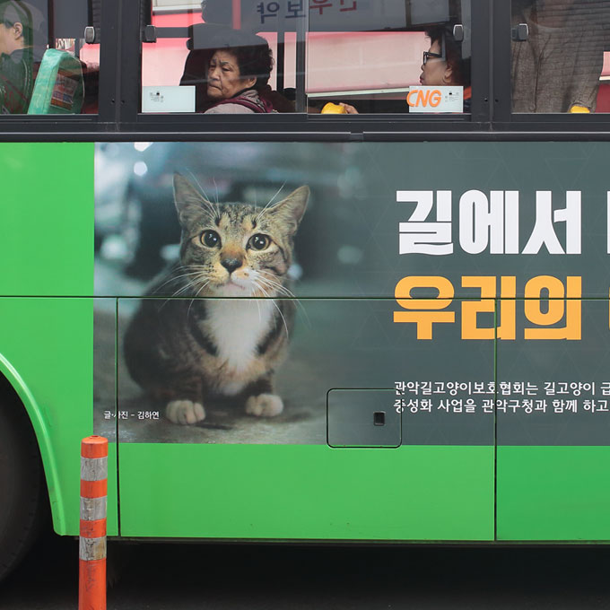 마을버스 탄 길고양이, 관악시민 만나다