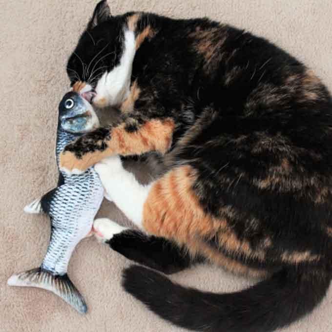 오징어, 참치 등 고양이한테 많이 주면 좋지 않은 수산물 4종