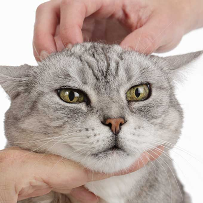 고양이한테 미움 받아버리는, 쓰담쓰담 법 3