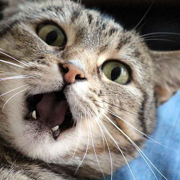 고양이의 마음을 얻지 못하는 사람 특징 5