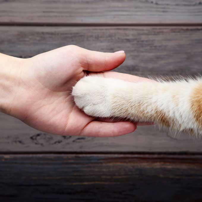 고양이가 집사를 진심으로 신뢰할 때 하는 행동 14 선