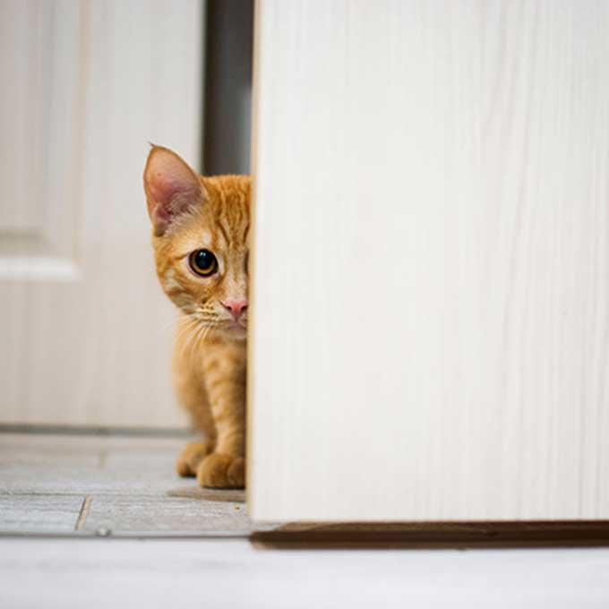 고양이가 집사를 관찰 또는 감시하는 곳 5