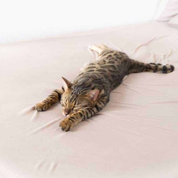 고양이가 집사를 정말로 신뢰할 때 곁에서 자는 모습 5