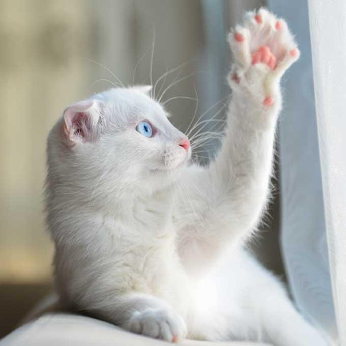 육구 색으로 본 고양이 성격 진단