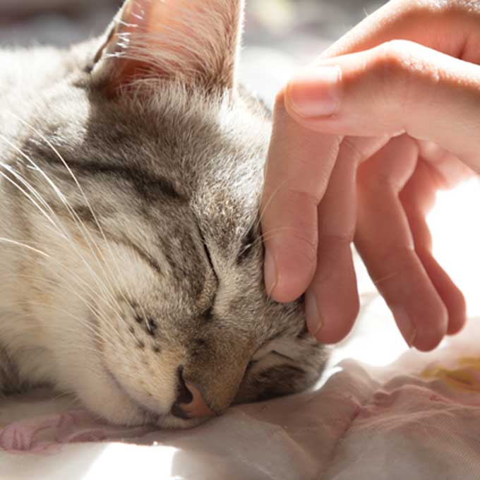 고양이의 마지막 길, 집사로서 해줄 수 있는 것에 대해