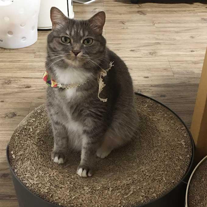 고양이가 집사에게 바라는 9가지