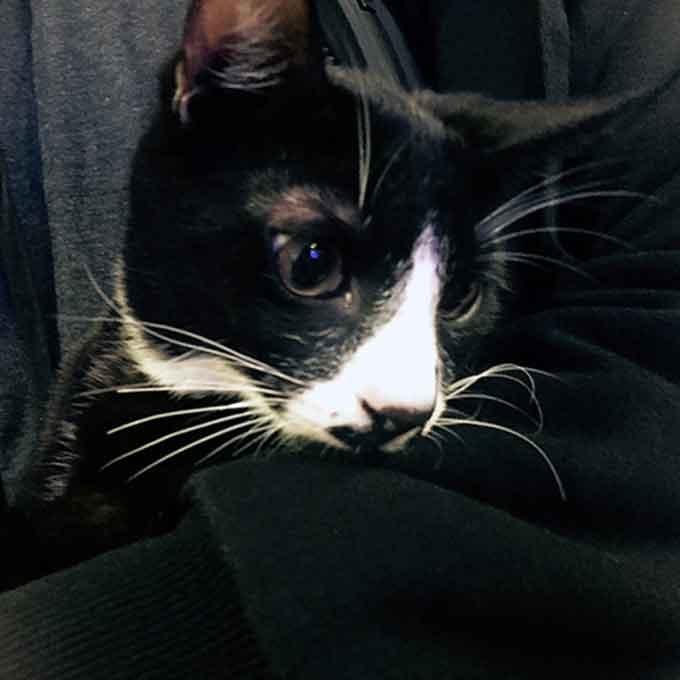 고양이 학대 PC방 사장, 최고벌금 700만원 선고