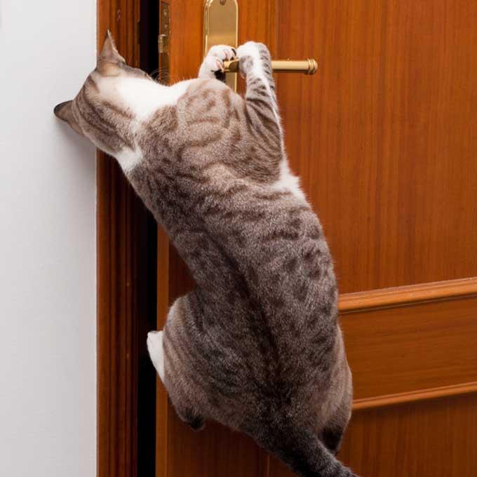 고양이 지능에 관한 여섯 가지 특징