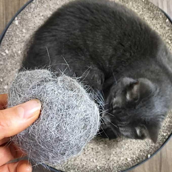 그 흔했던 고양이 털의 '환골탈태'