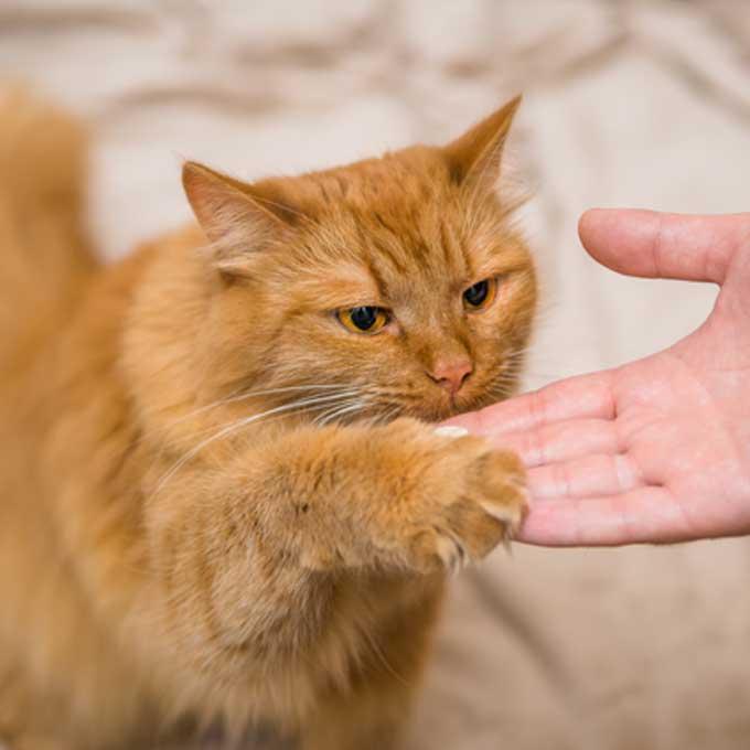 고양이를 훈련시키겠고?, 집사로서 부적합한 유형 4