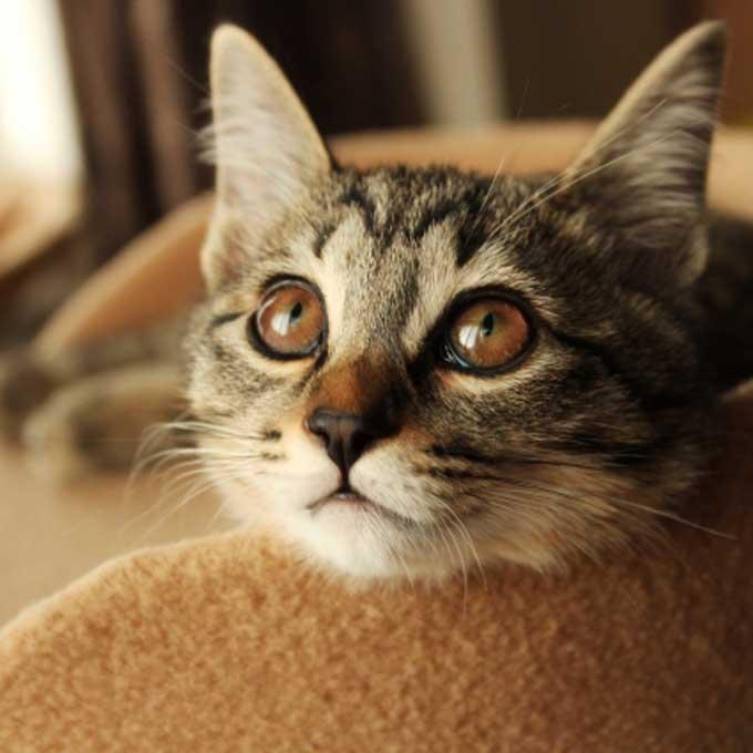 고양이가 집사를 걱정하고 있을 때 하는 행동 5