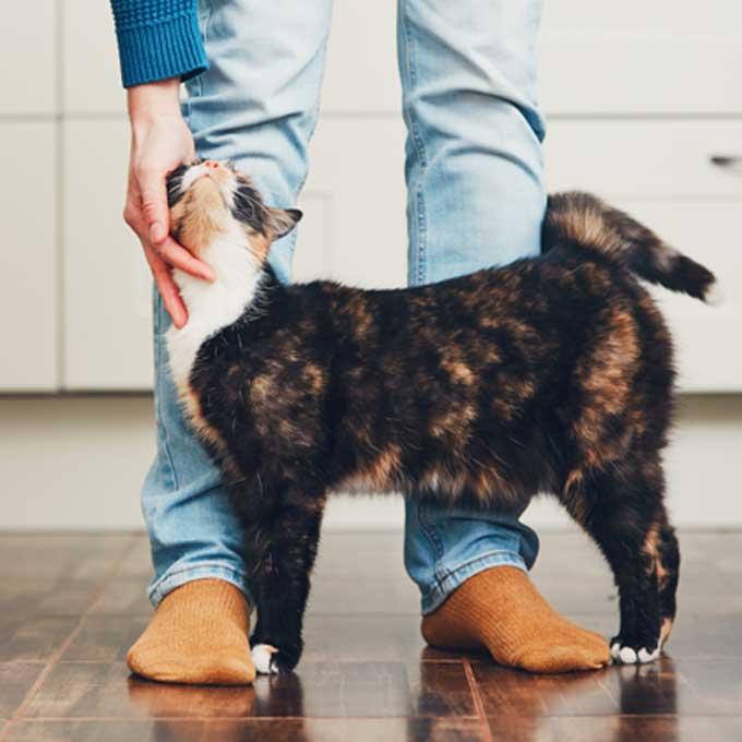 고양이를 위한 바람직한 집사의 생활습관 6