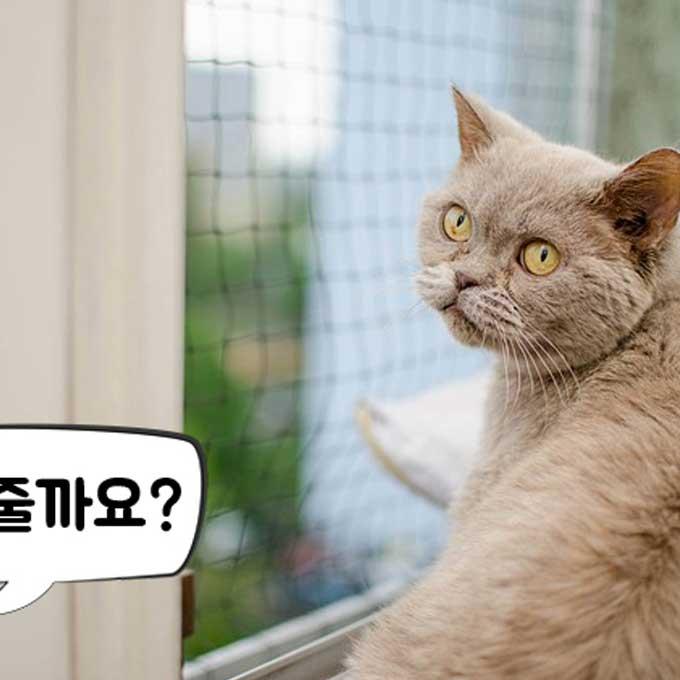 고양이가 확실하게 알아듣는 사람 말  6