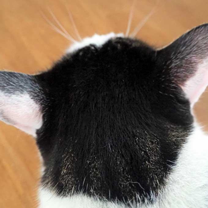 킁킁, 나도 모르게 냄새 맡게 되는 고양이 신체 부위 3