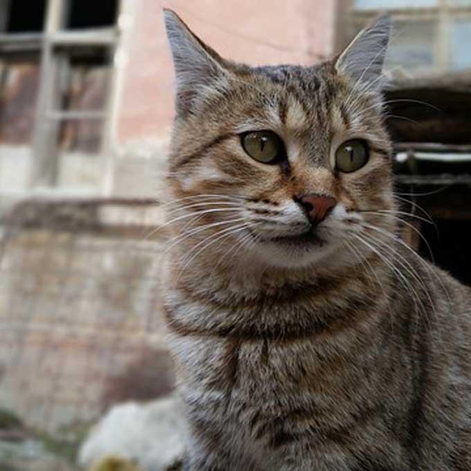 당신의 고양이가 유기묘가 되는 상황 4