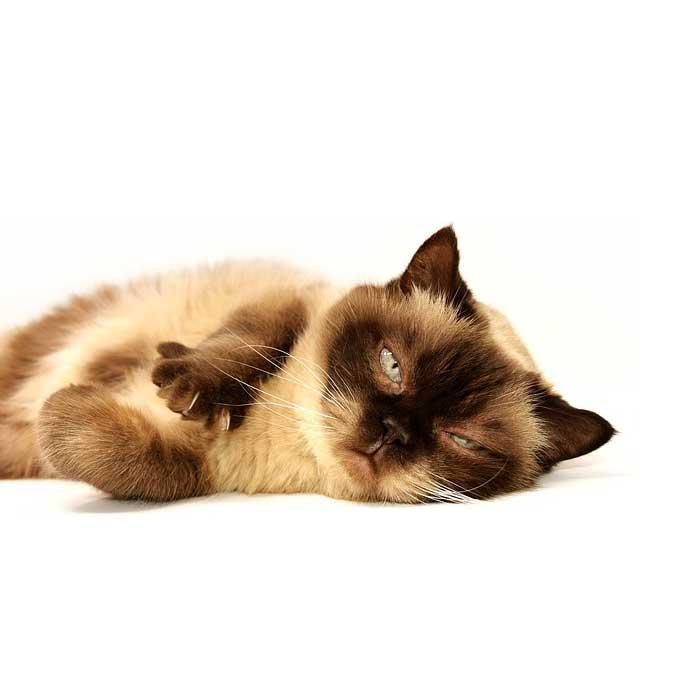 고양이가 꾹꾹이를 하고 싶어 하는 상황 3
