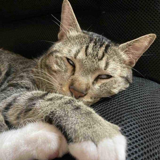 못생겼지만 귀엽게, 고양이가 꿀잠 중일 때 모습 3