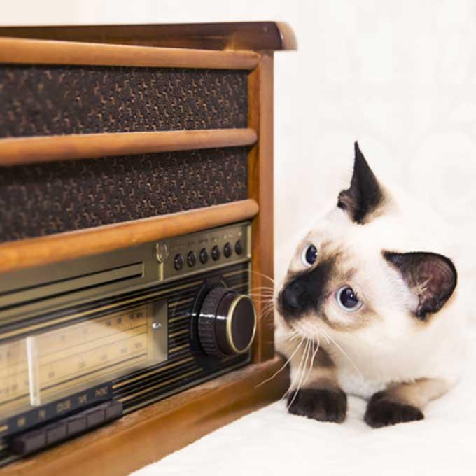 고양이가 좋아하는 소리 4