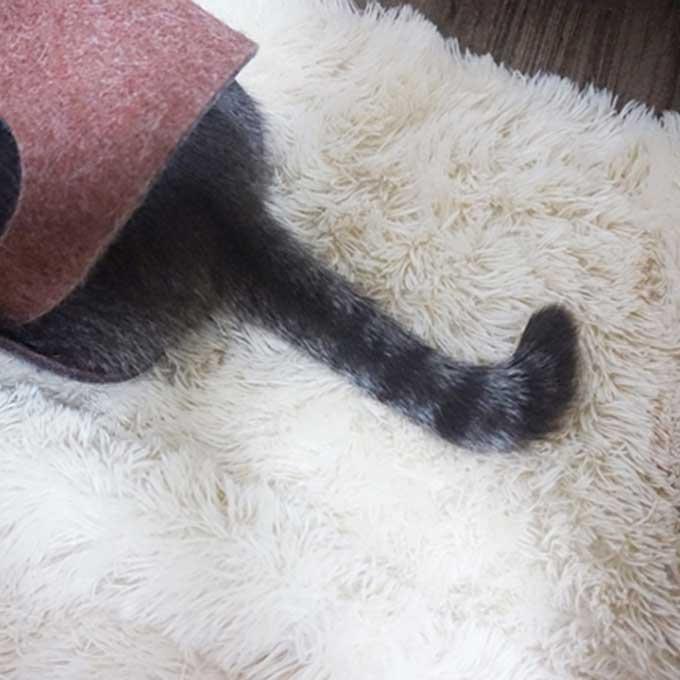집사의 부름에 고양이가 열성적으로 대답하는 7가지 방법