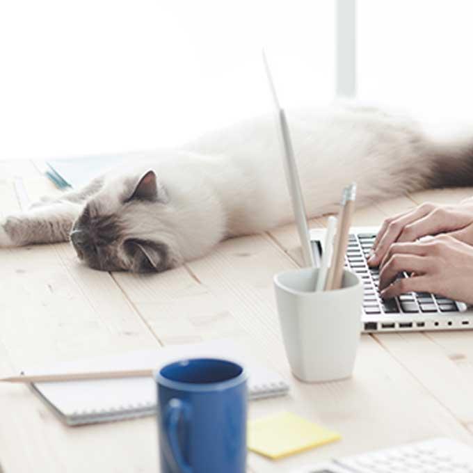 고양이가 집사를 매우 신뢰할 때 앉는 곳 5