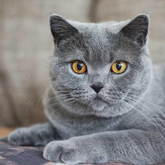 고양이가 집사에게 부탁할 때 하는 행동 4