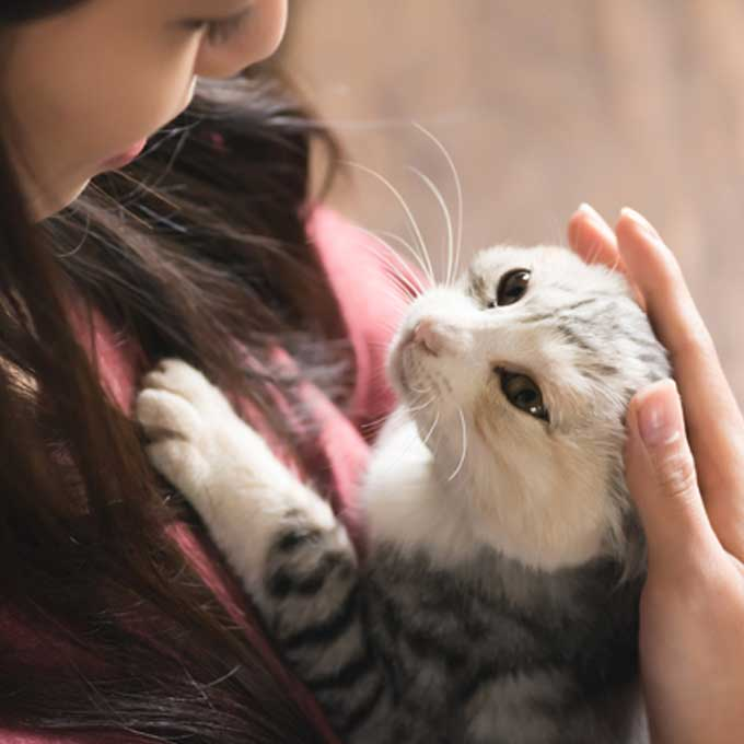 고양이 행동을 '제대로' 이해하는 포인트 5